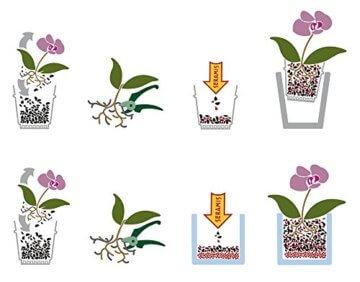 Seramis Ton-Granulat für Orchideen, Spezial-Substrat, 2,5 Liter - 5