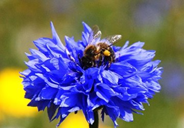 Samenbälle BIENEN MISCHUNG: Eine Wunderschöne Hilfe Für Bienen Durch Wildblumensamen. Ein Tolles Garten Geschenk - 5