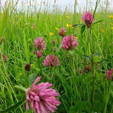 Samenbälle BIENEN MISCHUNG: Eine Wunderschöne Hilfe Für Bienen Durch Wildblumensamen. Ein Tolles Garten Geschenk - 8