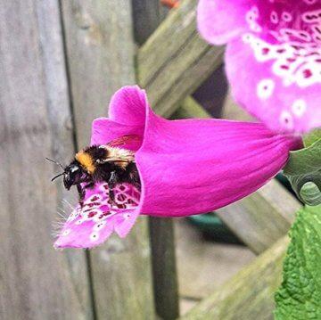 Samenbälle BIENEN MISCHUNG: Eine Wunderschöne Hilfe Für Bienen Durch Wildblumensamen. Ein Tolles Garten Geschenk - 9